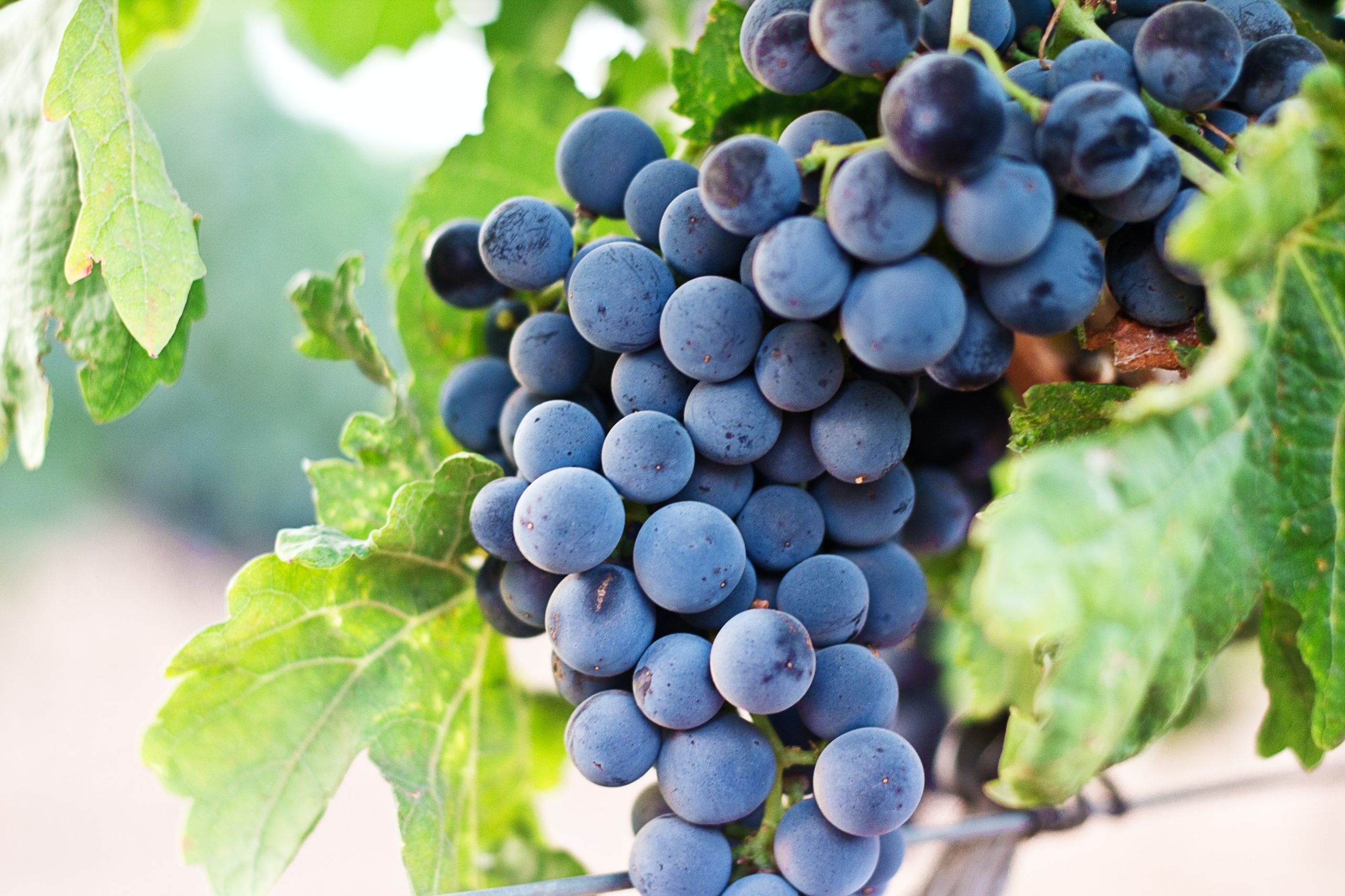 A guide on Hepatitis on World Hepatitis Day  Grapes